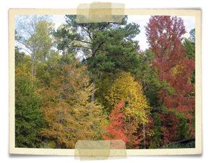 Fall2007_1