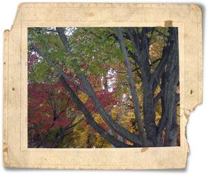Fall2007_5