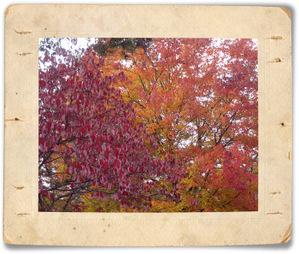 Fall2007_6