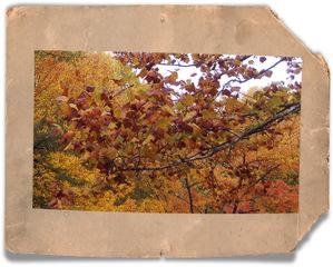 Fall2007_7